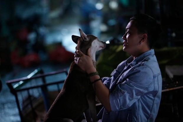 4 em chó ta trên màn ảnh Việt: Nhìn cưng mà diễn tự nhiên, nào có kém cạnh chú Shiba Inu đóng Cậu Vàng? - Ảnh 9.
