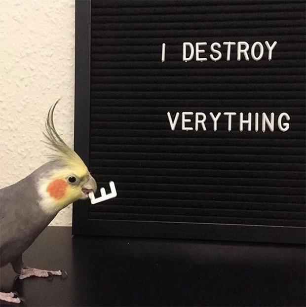 Bật cười trước những khoảnh khắc ngẫu hứng đầy thú vị của loài chim - Ảnh 7.