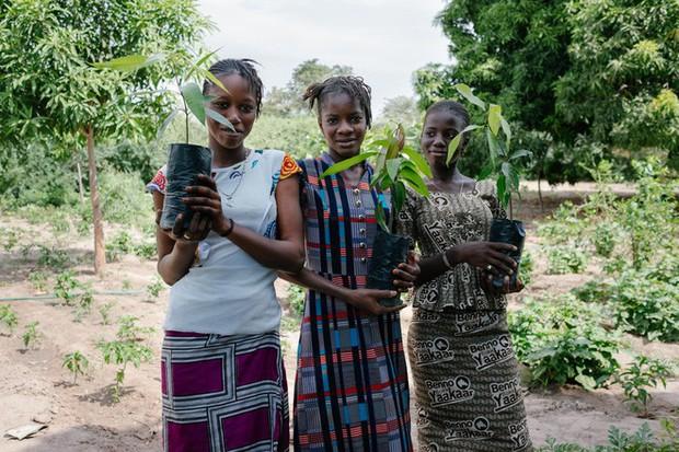 Muốn cứu Trái đất hãy dùng website này thay Google: Dành 80% lợi nhuận để trồng rừng, cứ 45 lượt tìm lại thêm một cây xanh mới được tạo - Ảnh 8.