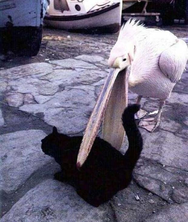 Bật cười trước những khoảnh khắc ngẫu hứng đầy thú vị của loài chim - Ảnh 9.
