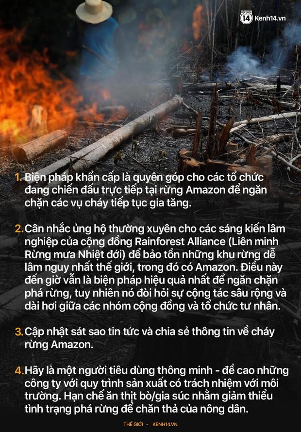 Sự thật về bức ảnh chú gấu nhỏ tuyệt vọng trong biển lửa của trận cháy rừng Amazon - Ảnh 3.