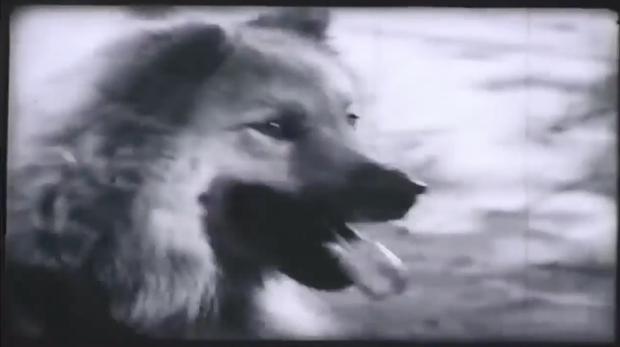 Cần gì Shiba, 39 năm trước từng có một chú chó ta đóng Cậu Vàng với Lão Hạc rất ổn đây này! - Ảnh 3.