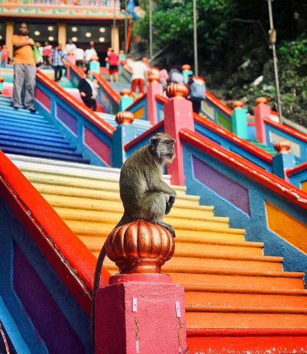 Tỉnh mộng trước nấc thang cầu vồng nổi tiếng nhất Malaysia: Nhìn hình sống ảo thì phát ham, nhưng thực tế lại phũ phàng hơn! - Ảnh 33.