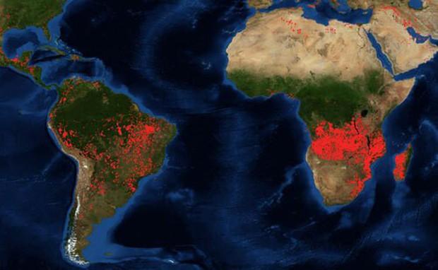 Rừng châu Phi cháy gấp 3 lần Amazon - Ảnh 3.