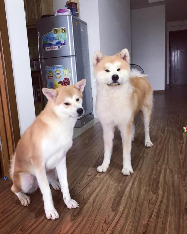 Giữa một rừng nhà sáng tạo nội dung siêu ngầu của Lotus, từ đâu lòi ra một chú chó - chính là Momo Inu lừng danh - Ảnh 4.