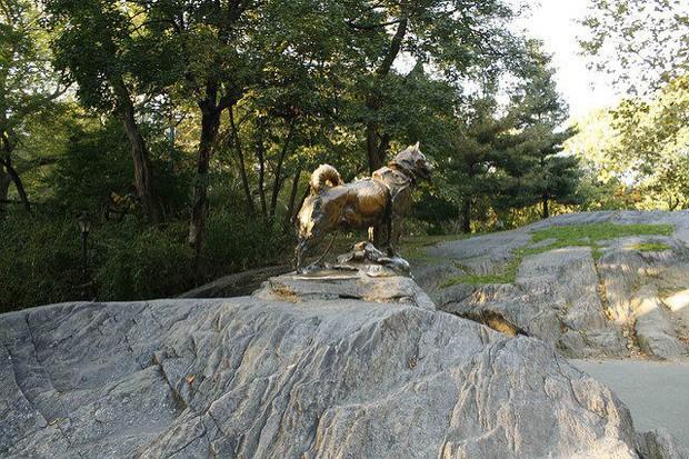 Câu chuyện có thật về 150 chú chó husky anh hùng từng cứu sống ngôi làng 10.000 người khỏi căn bệnh bạch hầu tử thần - Ảnh 5.