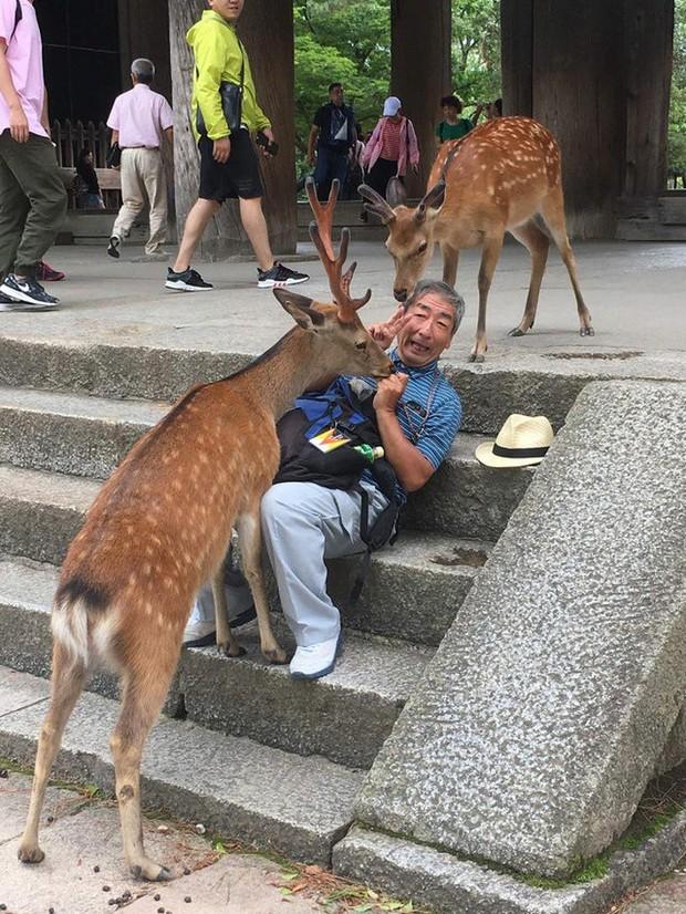 18 bức ảnh độc đáo cho thấy một Nhật Bản kỳ lạ và bá đạo chắc chắn sẽ khiến bạn phải bất ngờ - Ảnh 18.