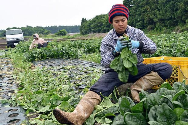 Góc khuất về miền đất hứa Nhật Bản: Người lao động nước ngoài bị ngược đãi, vắt kiệt sức lực, bỏ mạng nơi đất khách, không đủ tiền về nhà - Ảnh 5.