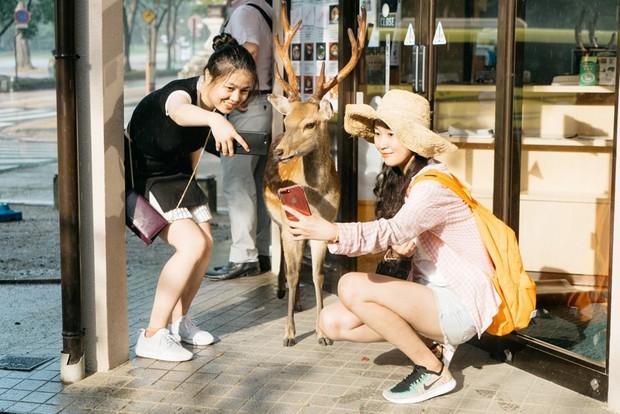 Đến Nhật Bản, du khách phải cúi đầu chào... những chú nai và cho chúng ăn thật lịch sự nếu không muốn bị tấn công - Ảnh 4.