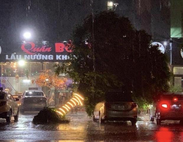 Hàng loạt cây xanh bật gốc, đường ngập sâu khi bão số 3 ập vào Móng Cái - Ảnh 1.