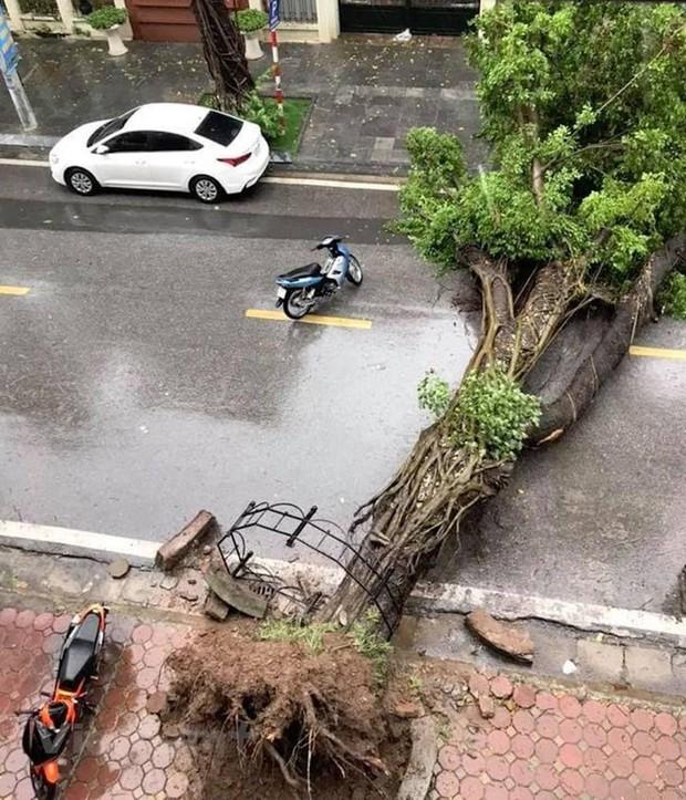 Cây cối bị quật đổ tại Hà Nội do ảnh hưởng của bão số 3 - Ảnh 1.