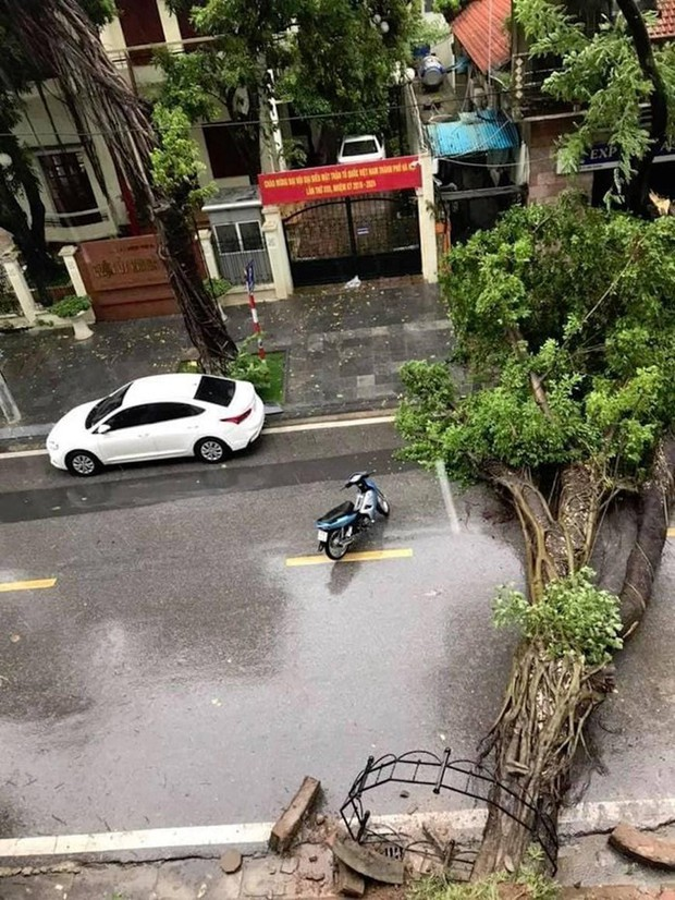 Cây cối bị quật đổ tại Hà Nội do ảnh hưởng của bão số 3 - Ảnh 2.