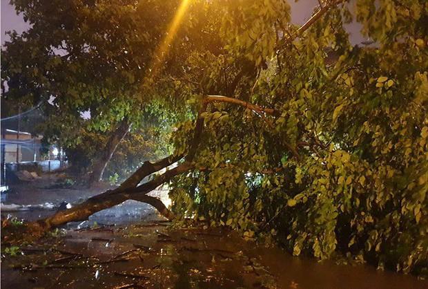 Hàng loạt cây xanh bật gốc, đường ngập sâu khi bão số 3 ập vào Móng Cái - Ảnh 3.