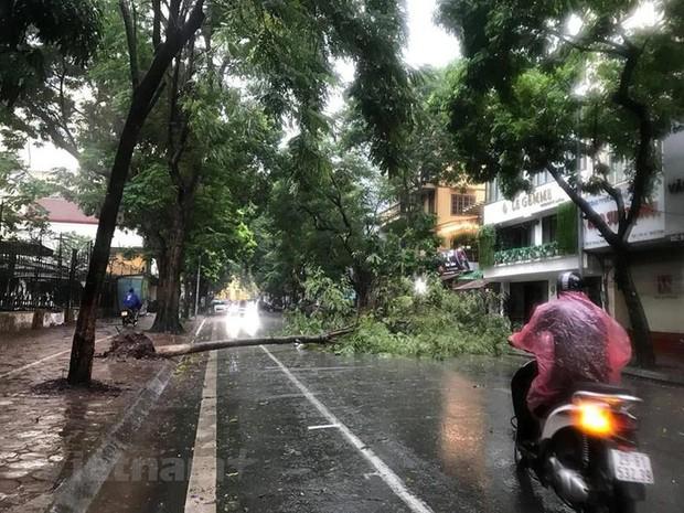 Cây cối bị quật đổ tại Hà Nội do ảnh hưởng của bão số 3 - Ảnh 3.