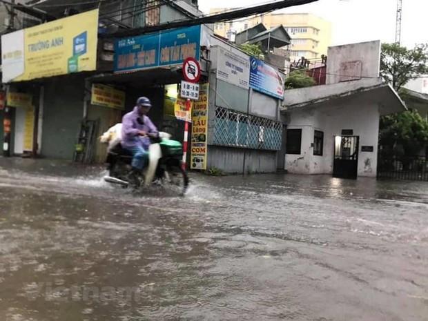 Cây cối bị quật đổ tại Hà Nội do ảnh hưởng của bão số 3 - Ảnh 5.