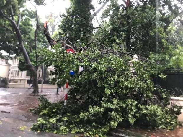 Cây cối bị quật đổ tại Hà Nội do ảnh hưởng của bão số 3 - Ảnh 6.
