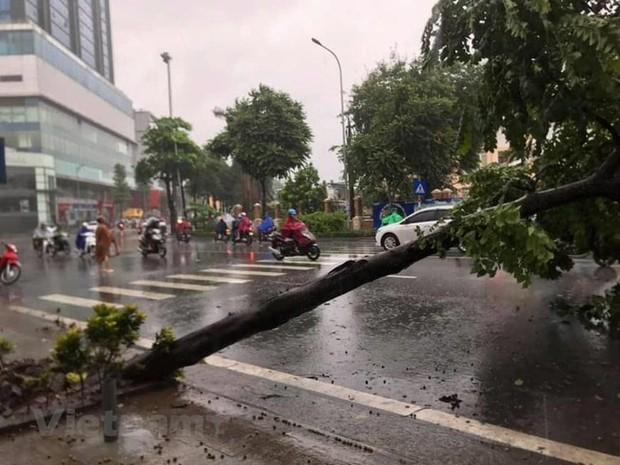 Cây cối bị quật đổ tại Hà Nội do ảnh hưởng của bão số 3 - Ảnh 7.