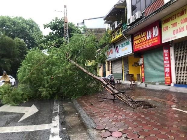 Cây cối bị quật đổ tại Hà Nội do ảnh hưởng của bão số 3 - Ảnh 8.
