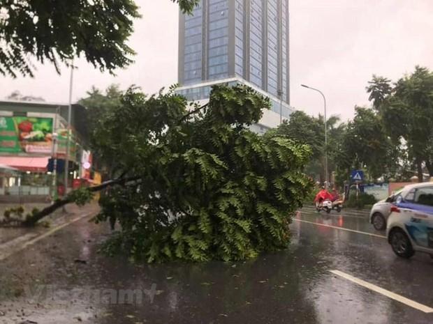 Cây cối bị quật đổ tại Hà Nội do ảnh hưởng của bão số 3 - Ảnh 9.