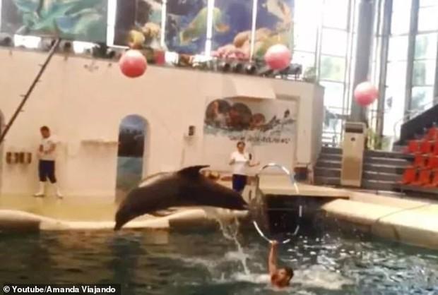 Chú cá heo con chết ngay trước mắt khán giả vì bị ép làm việc quá sức khiến nhiều người phẫn nộ - Ảnh 1.