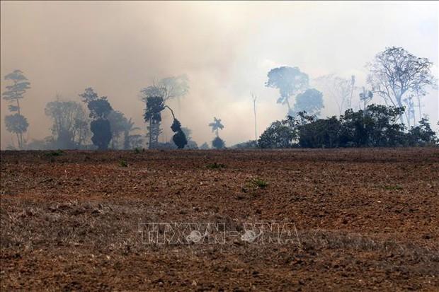 Brazil cân nhắc các đề nghị hỗ trợ dập cháy rừng Amazon - Ảnh 1.