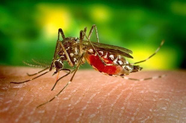Nhà hoạt động vì quyền động vật hô hào người dân để yên cho muỗi hút máu vì nó còn phải nuôi con - Ảnh 1.