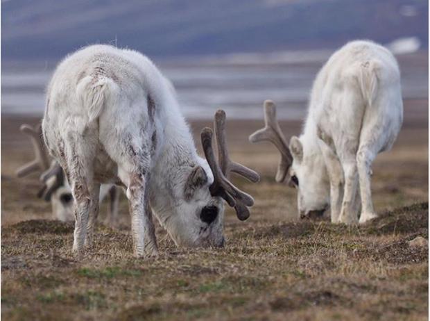 Sự đáng sợ của biến đổi khí hậu: Đến động vật ở vùng lạnh nhất cũng không thể sống nổi nữa - Ảnh 3.