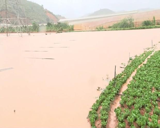 Đà Lạt ngập chưa từng thấy sau trận mưa lớn kéo dài, nhiều ô tô chìm trong biển nước - Ảnh 5.