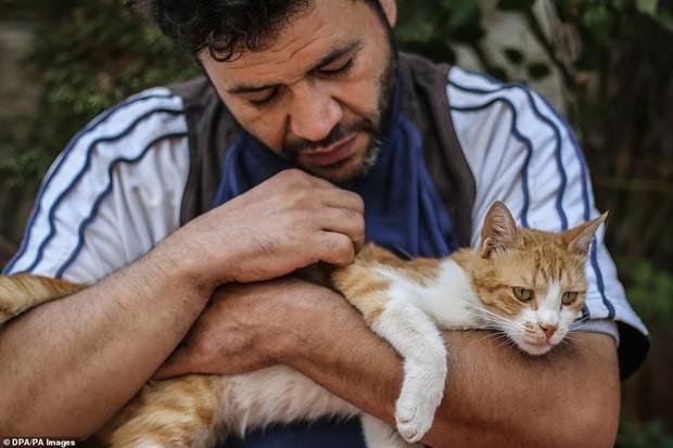 Người mèo vùng chiến sự: Hình ảnh cảm động về anh lái xe suốt 8 năm cứu người và mèo bị bỏ rơi trong mưa bom bão đạn Syria - Ảnh 6.