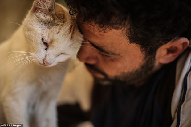 Người mèo vùng chiến sự: Hình ảnh cảm động về anh lái xe suốt 8 năm cứu người và mèo bị bỏ rơi trong mưa bom bão đạn Syria - Ảnh 3.