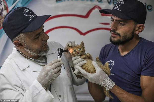 Người mèo vùng chiến sự: Hình ảnh cảm động về anh lái xe suốt 8 năm cứu người và mèo bị bỏ rơi trong mưa bom bão đạn Syria - Ảnh 9.
