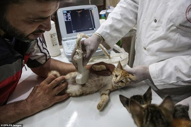 Người mèo vùng chiến sự: Hình ảnh cảm động về anh lái xe suốt 8 năm cứu người và mèo bị bỏ rơi trong mưa bom bão đạn Syria - Ảnh 10.
