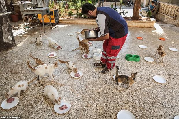 Người mèo vùng chiến sự: Hình ảnh cảm động về anh lái xe suốt 8 năm cứu người và mèo bị bỏ rơi trong mưa bom bão đạn Syria - Ảnh 7.
