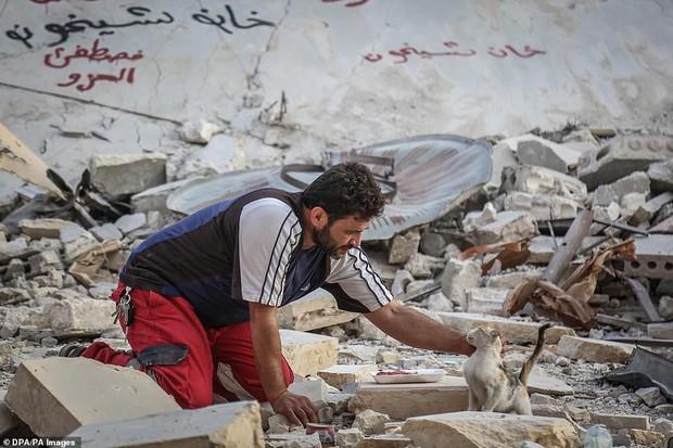 Người mèo vùng chiến sự: Hình ảnh cảm động về anh lái xe suốt 8 năm cứu người và mèo bị bỏ rơi trong mưa bom bão đạn Syria - Ảnh 1.