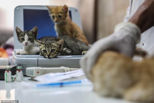 Người mèo vùng chiến sự: Hình ảnh cảm động về anh lái xe suốt 8 năm cứu người và mèo bị bỏ rơi trong mưa bom bão đạn Syria - Ảnh 8.
