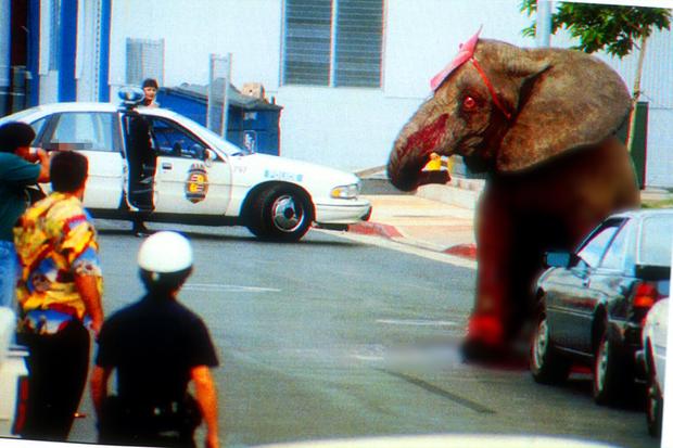 Tyke chú voi nổi loạn: Từ 20 năm bị bức ép đến lần gây tai họa cuối cùng và cái chết bi thảm làm rúng động ngành xiếc thú - Ảnh 6.