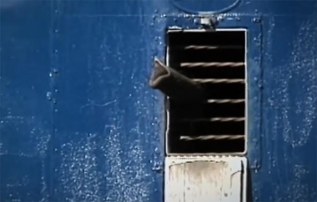 Tyke chú voi nổi loạn: Từ 20 năm bị bức ép đến lần gây tai họa cuối cùng và cái chết bi thảm làm rúng động ngành xiếc thú - Ảnh 2.
