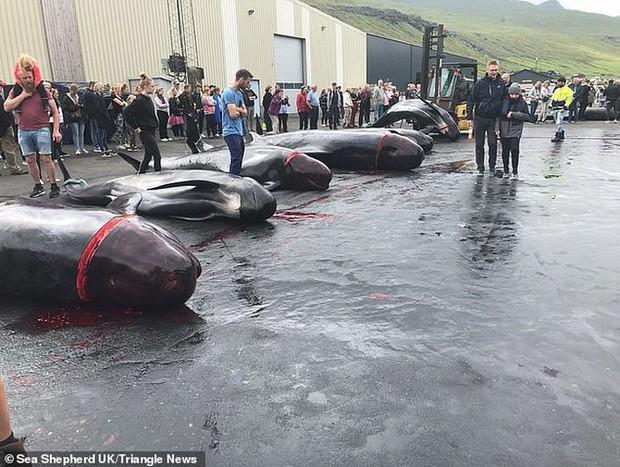 Hàng chục cá voi bị giết, máu nhuộm đỏ nước quần đảo Faroe - Ảnh 3.
