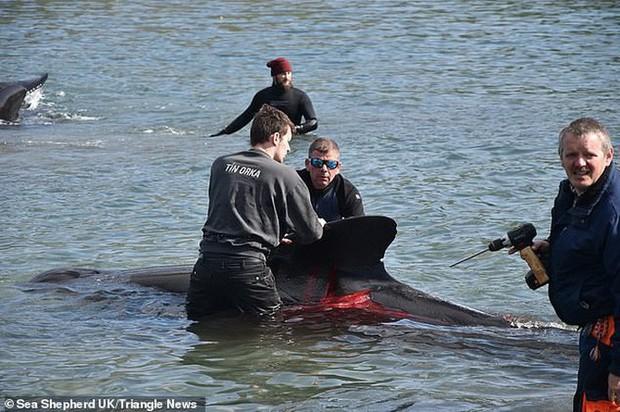 Hàng chục cá voi bị giết, máu nhuộm đỏ nước quần đảo Faroe - Ảnh 7.