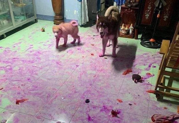 Chỉ vì quên đậy giỏ trái cây, thanh niên bị 2 boss ngáo nhuộm tím lịm tanh bành cả căn nhà như hiện trường vụ án - Ảnh 2.