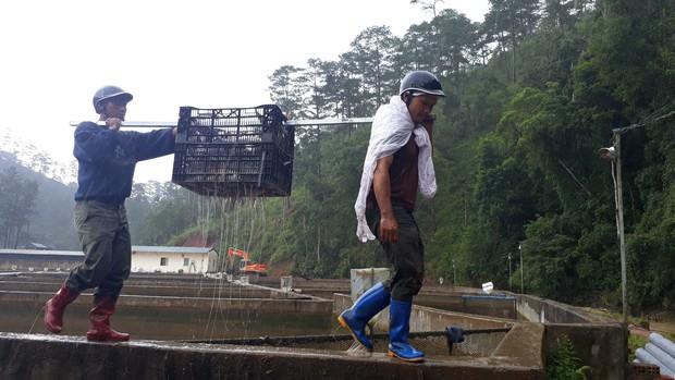 Sau lũ lớn kinh hoàng ở Lâm Đồng, người đàn ông cay đắng vì trang trại cá tầm 40 tỷ chết trắng hồ - Ảnh 3.