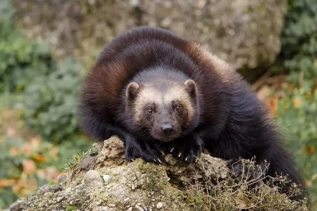 10 loài động vật trông vô hại nhưng cực kỳ nguy hiểm - Ảnh 2.