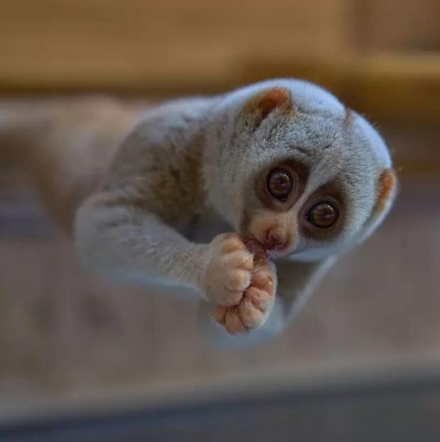 10 loài động vật trông vô hại nhưng cực kỳ nguy hiểm - Ảnh 4.