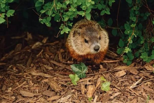 10 loài động vật trông vô hại nhưng cực kỳ nguy hiểm - Ảnh 6.
