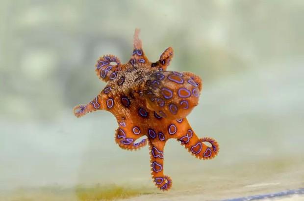 10 loài động vật trông vô hại nhưng cực kỳ nguy hiểm - Ảnh 9.