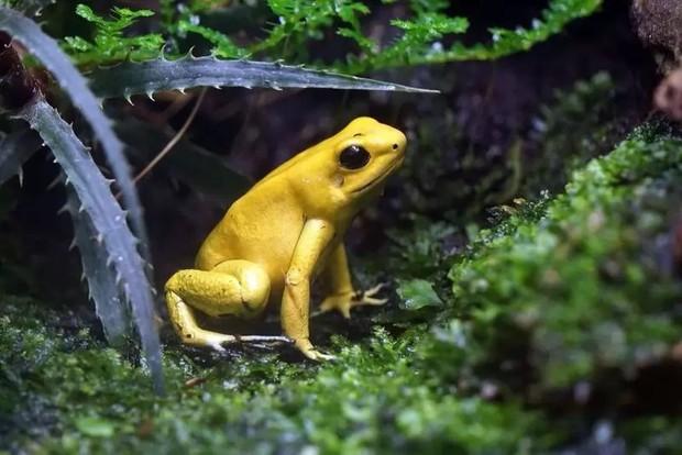 10 loài động vật trông vô hại nhưng cực kỳ nguy hiểm - Ảnh 10.