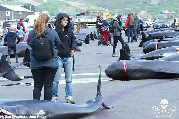 Hình ảnh thợ săn giết thịt 94 con cá voi làm bờ biển nhuốm đỏ, con non bị cắt khỏi bụng mẹ khiến nhiều người đau xót - Ảnh 4.