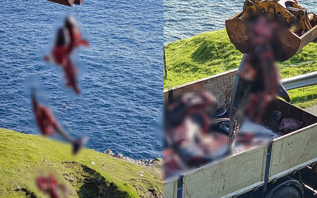 Hình ảnh thợ săn giết thịt 94 con cá voi làm bờ biển nhuốm đỏ, con non bị cắt khỏi bụng mẹ khiến nhiều người đau xót - Ảnh 5.