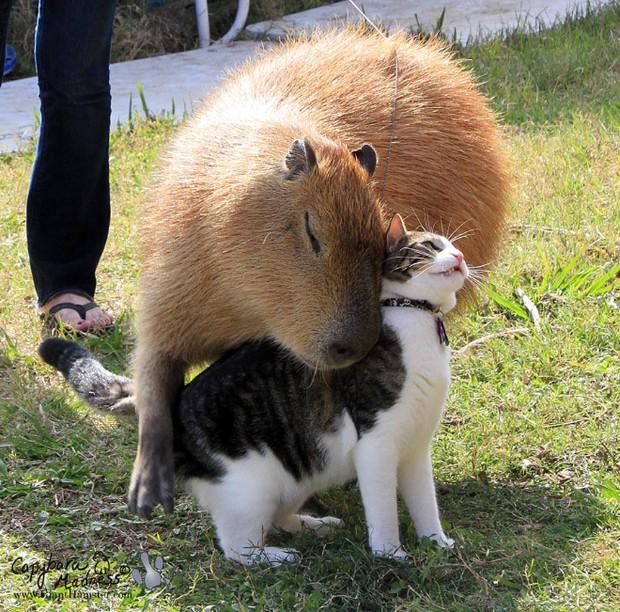 Chỉ mong đời thật an nhiên và yên bình như chuột lang béo ú: Thân thiện như hoa hậu hoàn vũ, giao lưu từ đầu gấu cho tới hiền lành trong giới động vật - Ảnh 4.