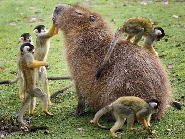Chỉ mong đời thật an nhiên và yên bình như chuột lang béo ú: Thân thiện như hoa hậu hoàn vũ, giao lưu từ đầu gấu cho tới hiền lành trong giới động vật - Ảnh 5.